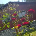 Květinové dny